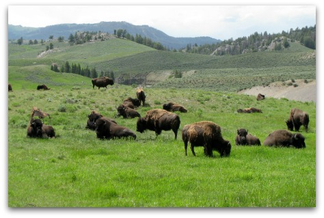 Yellowstone National Park | 2 Generations Running